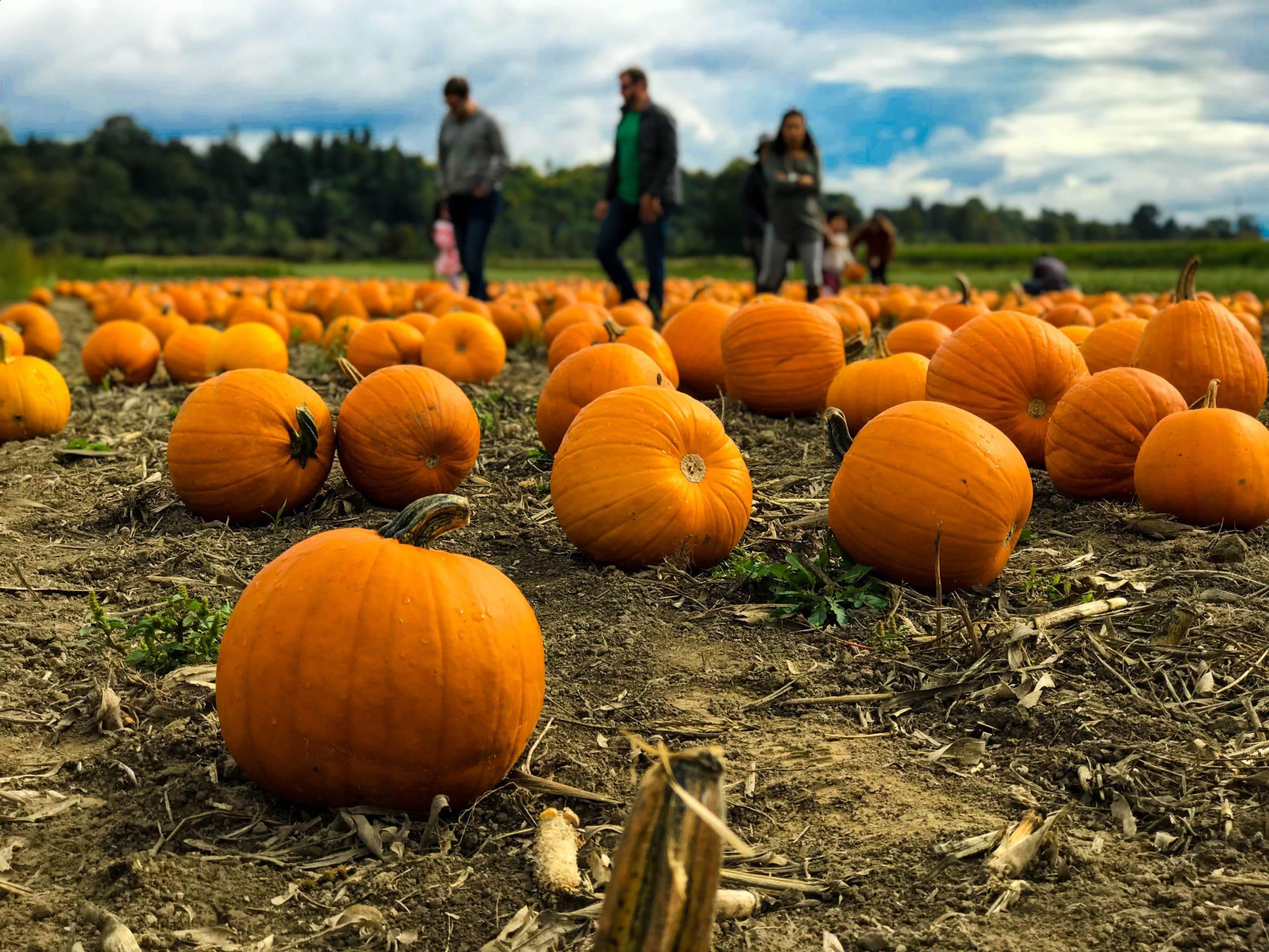 pumpkin autumn activities